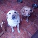 Cody & Daisy