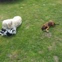 Freddie & Ozzie