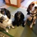 Barney, Saphie & Jemma