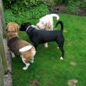 Dillon, Dylan & Neville