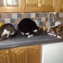 Thomas, Oliver & Tansie