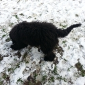Dixie Playing In The Snow
