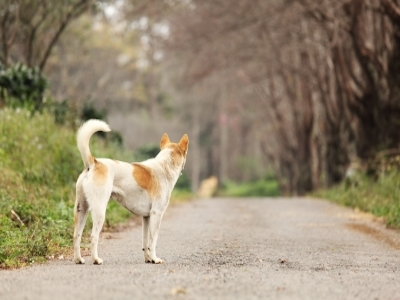 Pet GPS Tracking Collars