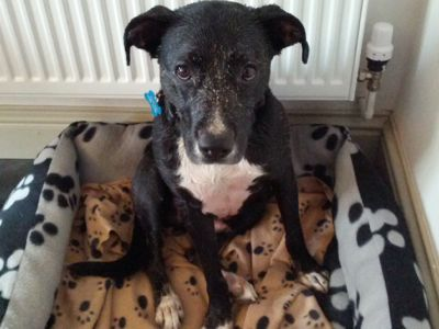 Manchester Dogs Home Fire & Irresponsible Dog Ownership Image