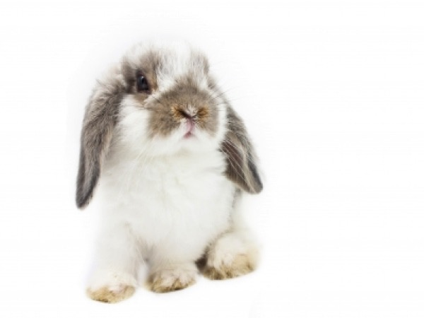What You Should Know About Rabbits' Diets Image