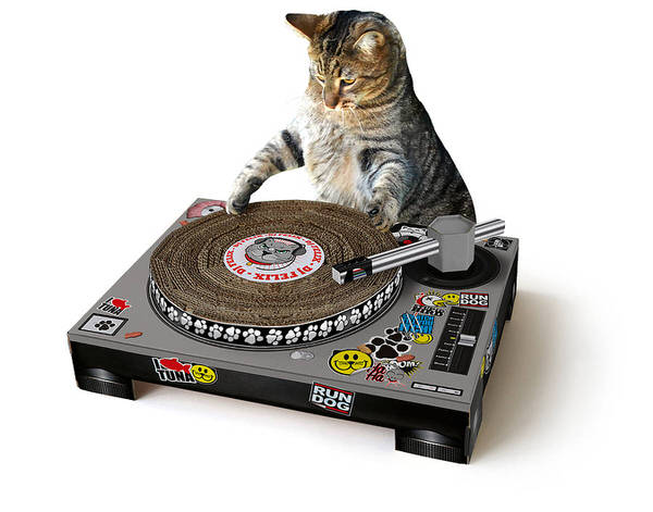 Top 5 Christmas Presents For Cats Image