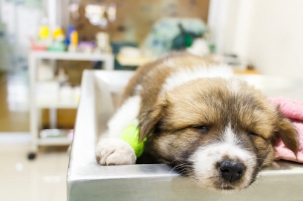 5 First Aid Tips For Dogs Image