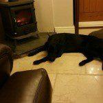 Home Dog Boarding in Sandbach – Quest @ Alison's (29/12/15)