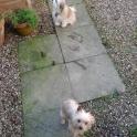 Lola & Tinkerbell (R.I.P.)