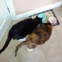 Barney (R.I.P.) & Mitsie