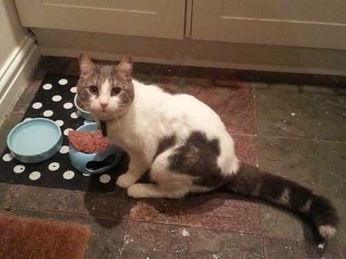 A Cute Cat Having His Dinner In Wilmslow