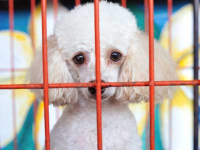 Separation Anxiety In Dogs Image