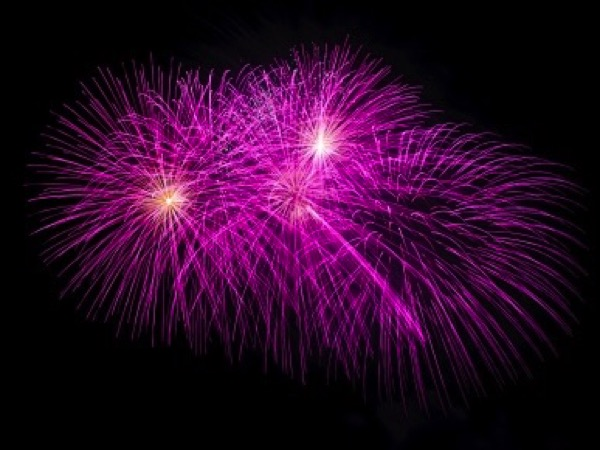 5 Tips For Keeping Your Pets Happy & Safe On Firework & Bonfire Night Image