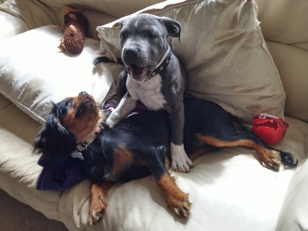 What Is Home From Home Dog Boarding Image