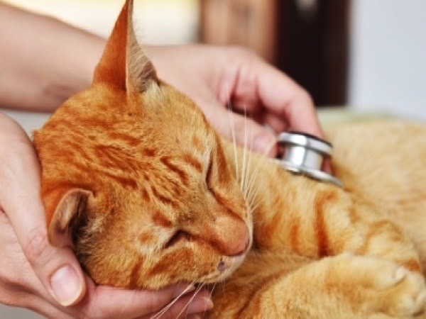 Basic Cat First Aid Tips Image