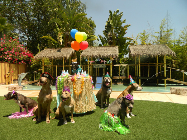 Most Luxury Pet Hotels Image
