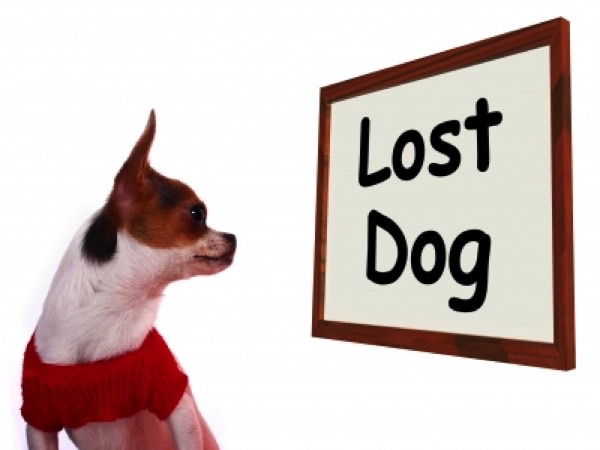 What To Do If Your Dog Goes Missing Image